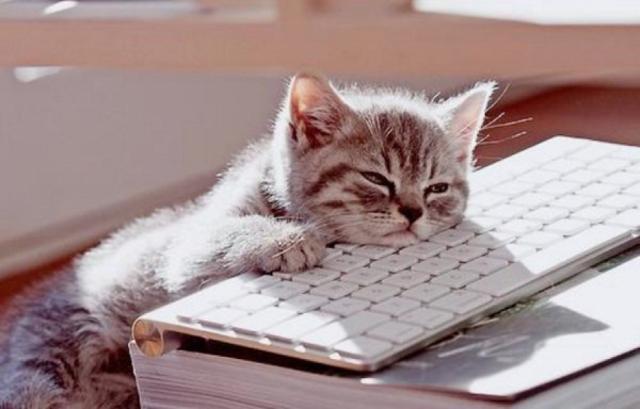 cat sleeping.png